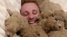 Guy in pile of puppies is National Puppy Day perfection