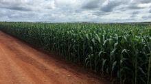 ISO raises 2018/19 global sugar surplus forecast