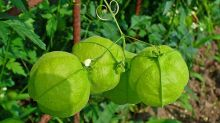 6 Lesser Known Health Benefits Of Tomatillos, Nutrition & Recipe