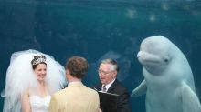 Beluga whale upstages bride on wedding day and sparks hilarious memes