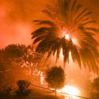Man and dog survive California wildfire by hiding in creek