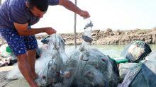 Blue crab invasion spells doom for Albanian fishermen
