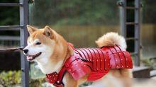Quer transformar seu pet em samurai? Japoneses criam armaduras para animais