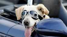 Driving with dogs: how to keep your pet safe and happy on the road