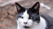 Nobody wants to give this abandoned cat a home for Christmas - because she's cross-eyed