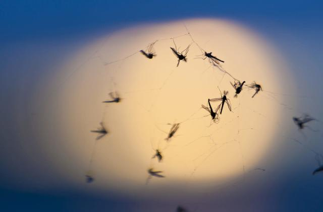 Verily's answer to Fresno's mosquito woes is 20 million more