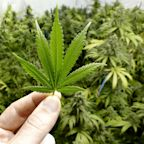 These Are the 5 Most Popular Marijuana Stocks
