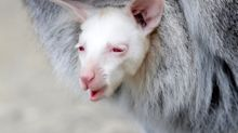 (FOTOS) Animales albinos: una rareza en la naturaleza