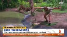 "Irwins outraged over Queensland Government's ""catastrophic"" crocodile decision"