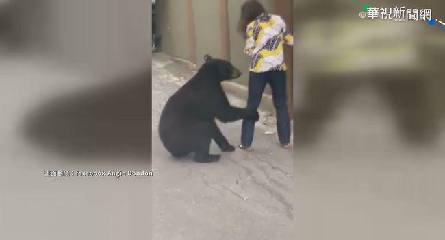 狂蹭女遊客 墨西哥黑熊睡夢中遭閹割