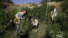 Why Moms Are Pioneering the Marijuana Industry