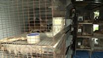 Police Find Nearly 400 Rabbits In Man`s Garage