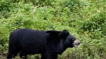 Human remains found inside bears suspected of killing and eating dogwalker