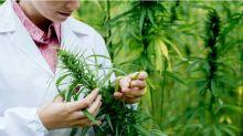 4 Best Marijuana ETFs for Conservative Portfolios