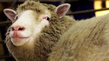 Sheep in Ireland Go on Week-Long Sex Drive After Drinking Water Contaminated by Viagra