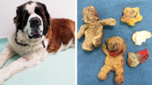 Dog feared to have cancer had actually eaten four teddy bears... but vet didn't realise until midway through operation