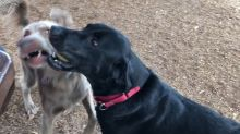 Dogs struggle to understand the concept of sharing