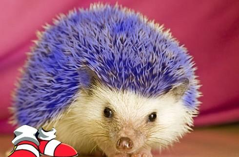 Sonic fan gets town's pet hedgehog ban overturned
