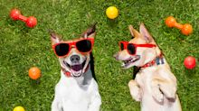 15 things every pet owner should get their dog for summer