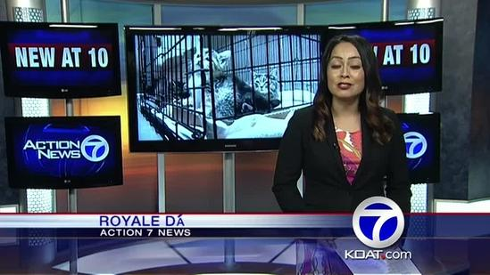 Albuquerque shelters slammed with kittens