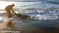 Man helps stuck dolphin back into water