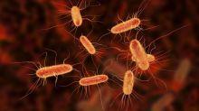 Un hito histórico: modifican la bacteria E.coli para que consuma CO2