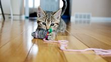 'Best cat toy ever': Why pet owners and felines love this $10 find