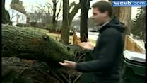 Trees topple on homes