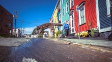 Water main fixed, road repairs underway and a neighbourhood cat that stole the show in St. John's