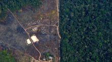 """Coronavirus : le """"jour du dépassement"""" a reculé de trois semaines avec la baisse des abattages forestiers"""