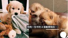 狗狗一生入面分為 4 個重要階段!唔知你家愛犬正處於那一個階段呢?