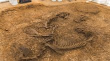 Iron Age chariot and horse found buried together in Yorkshire