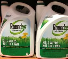 California to list glyphosate as cancer-causing; Monsanto vows fight