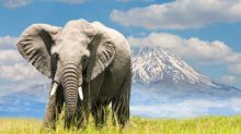 Elephants Need Protecting. Lifting The Ivory Ban Is No Solution