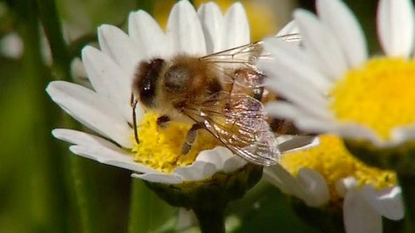 Seeds for bees program helps hive health
