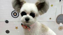 Goma, el perro que se ha hecho viral con sus orejas de Mickey Mouse