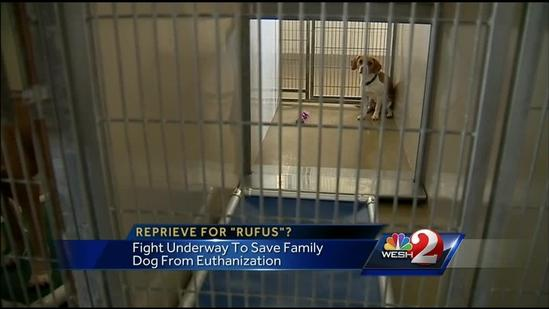 Family fights to save dog who may be put down
