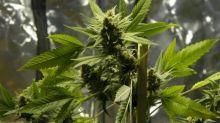 La difícil pero quizás necesaria justificación para dar marihuana a un niño que sufre