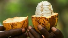 More than beans: Nestle recycles cocoa fruit waste to replace sugar in chocolate