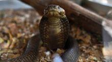 When snakes strike, lives shatter