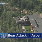 Bear Opens Front Door, Attacks Man Inside Aspen Home