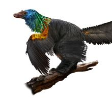 Feathered Dinosaur Shimmered Like a Rainbow, Fossil Reveals