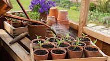 Why gardening is so good for your mental health