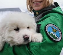 3 dogs give avalanche rescuers hope but 22 people missing