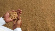 Prolonged winter to help up output of rabi crops like wheat, oilseeds
