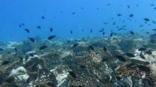 Tiny Organisms like Planktons Control Ocean Nutrients, Finds Study