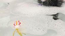 Cómo y cuándo debes bañar a mi gato