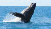 Baleia de 12 metros é encontrada morta na Praia Grande, litoral paulista