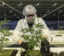 Aurora Cannabis stock suffers worst day in more than five years, analyst says 'it would be fair for investors not to believe them'
