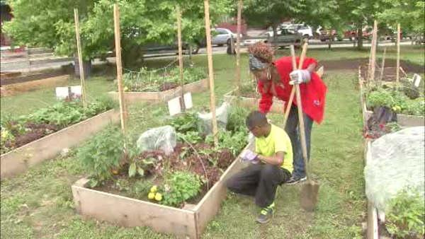 Strawberry Mansion community turns vacant lot into garden